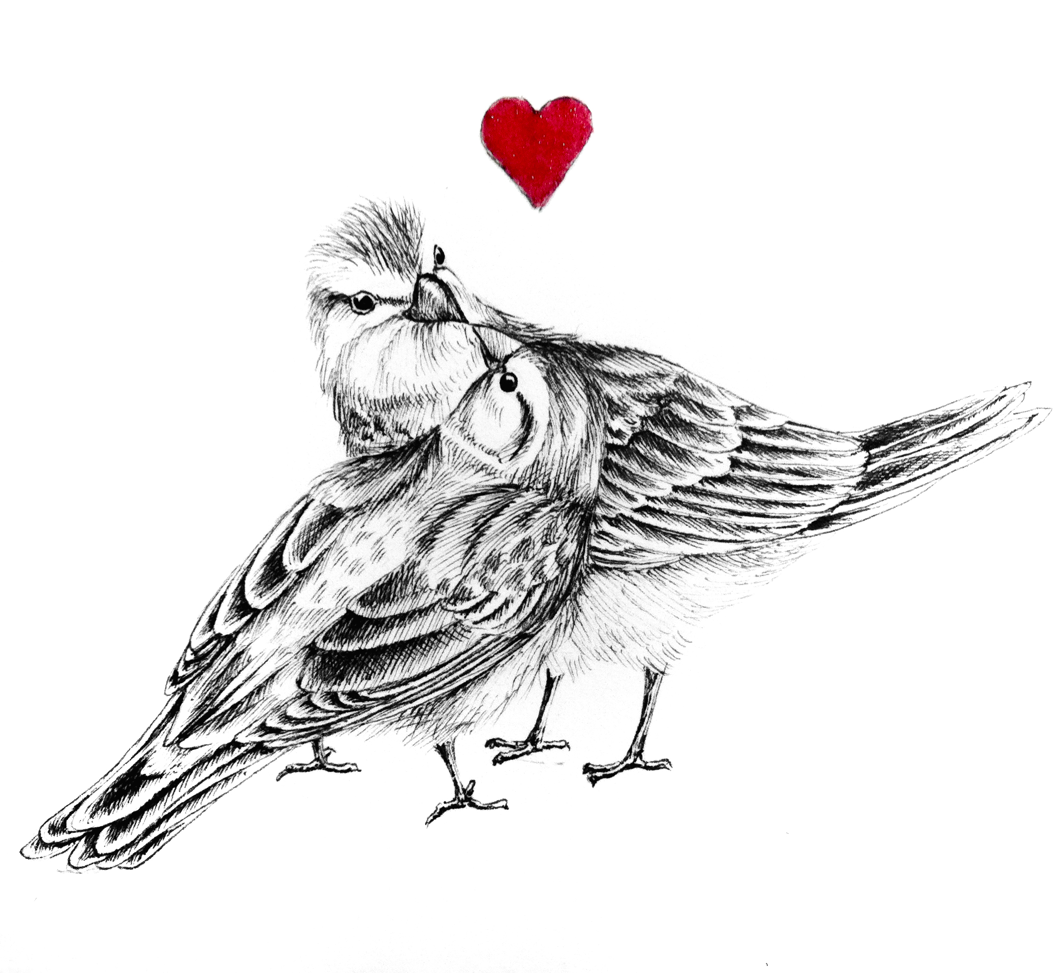sparrows, love, birds