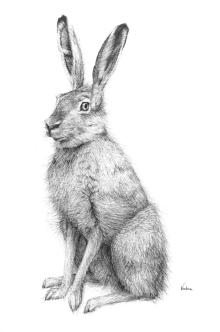 winter, hare, wildlife, devon, rural, drawing, ink, illustration, Anna Ventura, artist