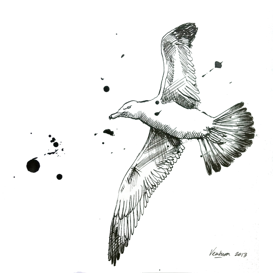 Seagull, gull, ink, drawing